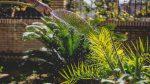 Tuinonderhoud in het voorjaar