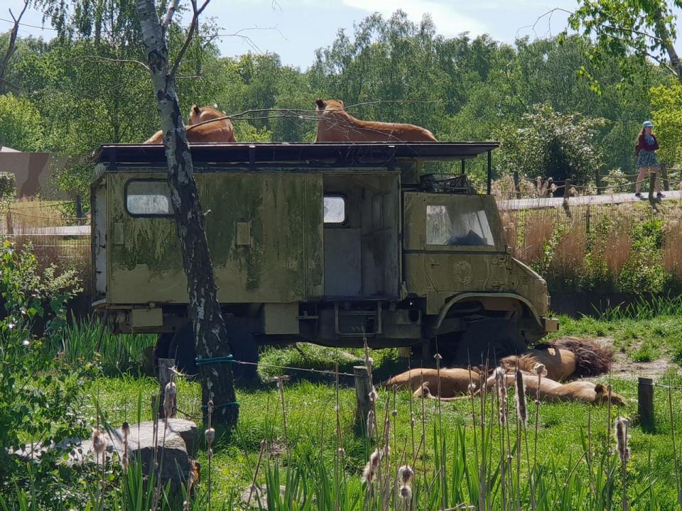 Met korting naar Safaripark Beekse Bergen? VakantieVeilingen!